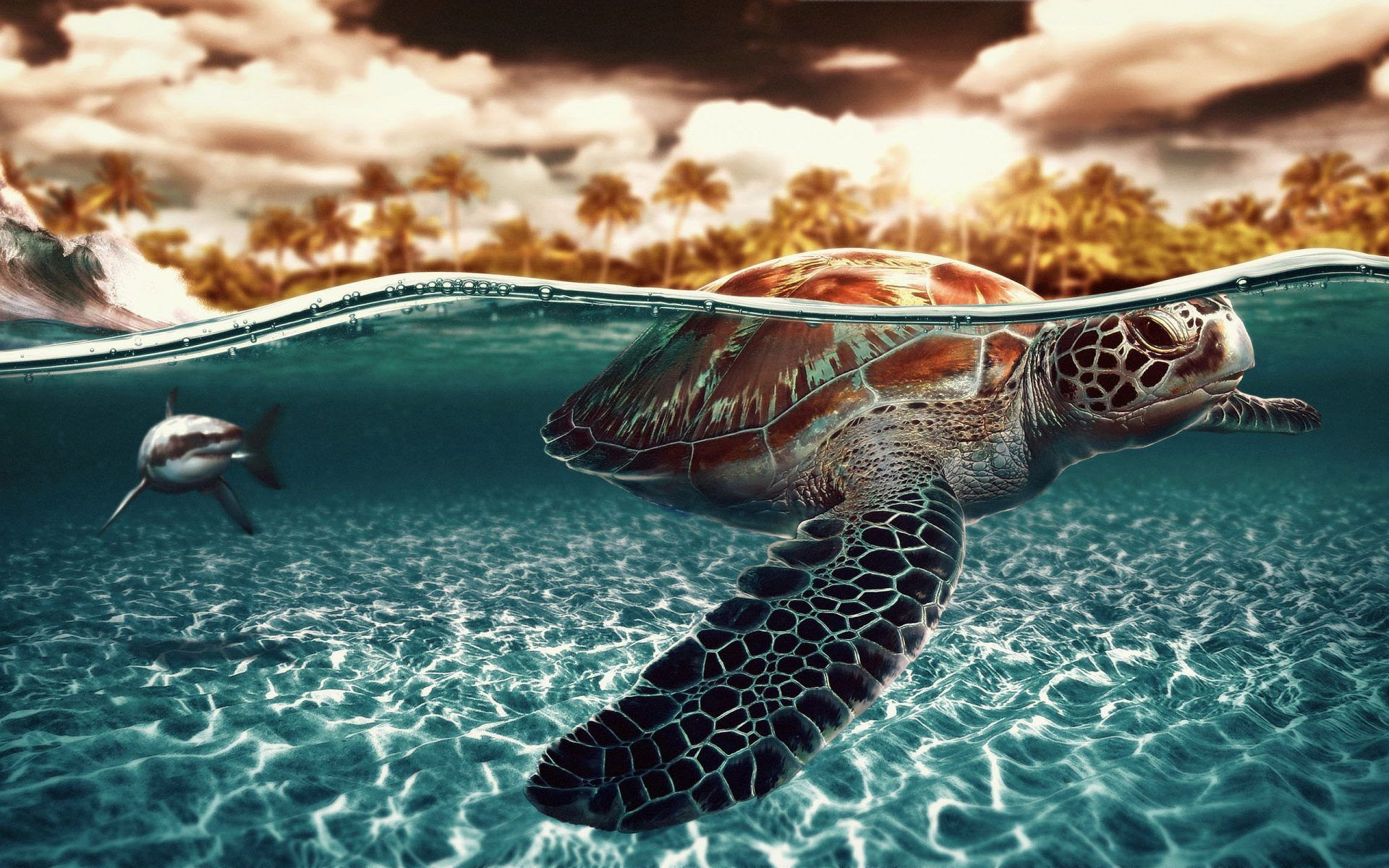turtle background wallpapers 4k