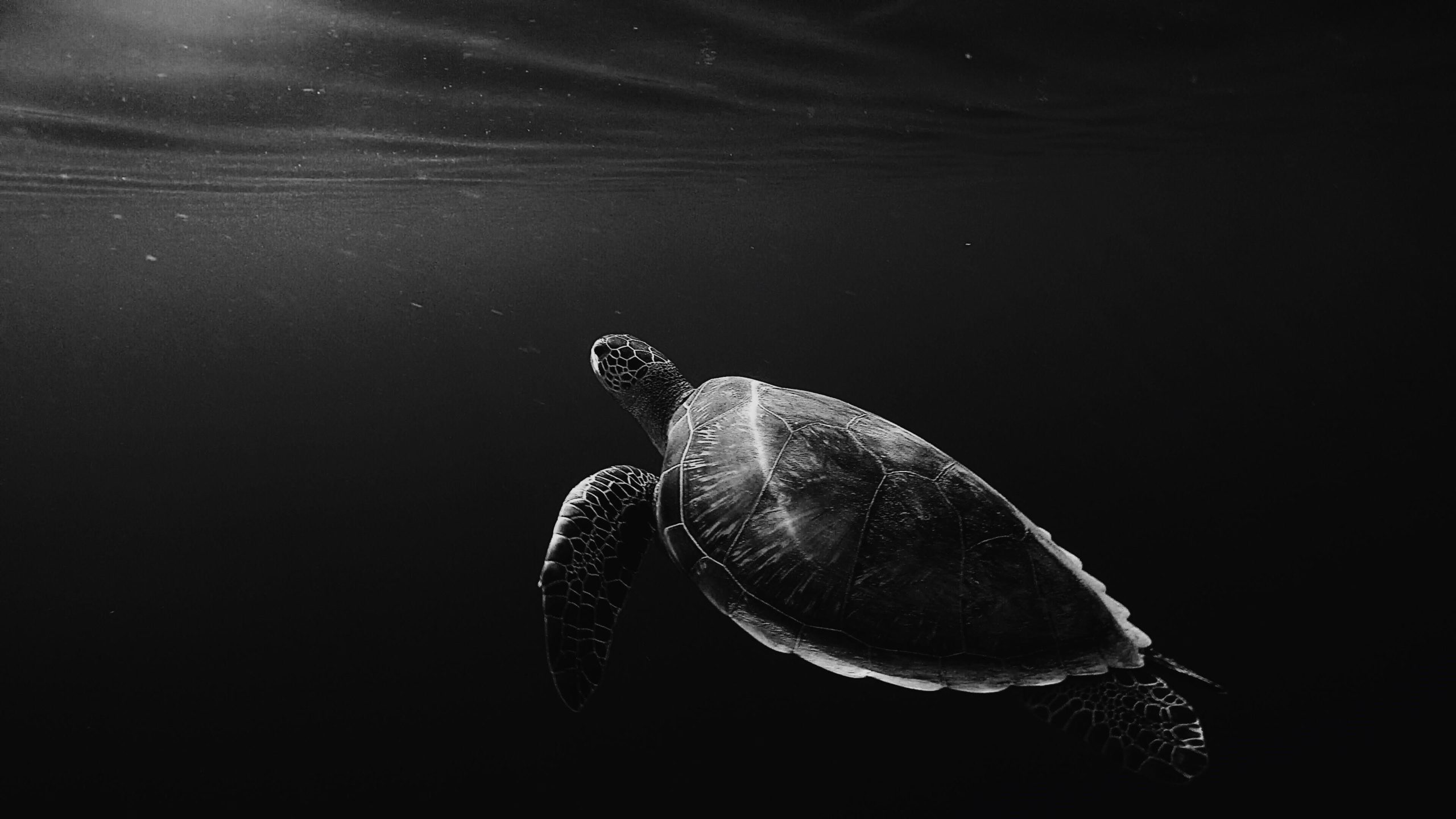 turtle images free