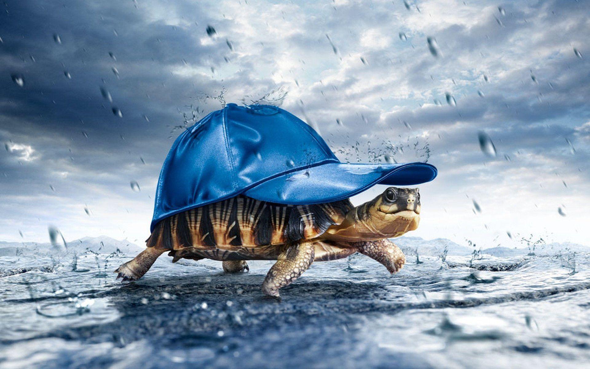 photos of turtles