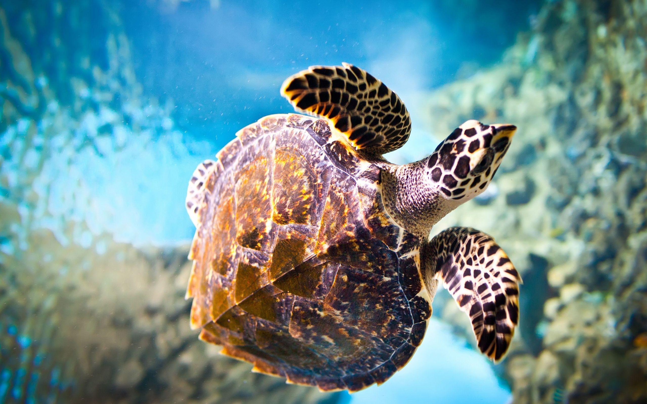 turtle screensaver wallpapers