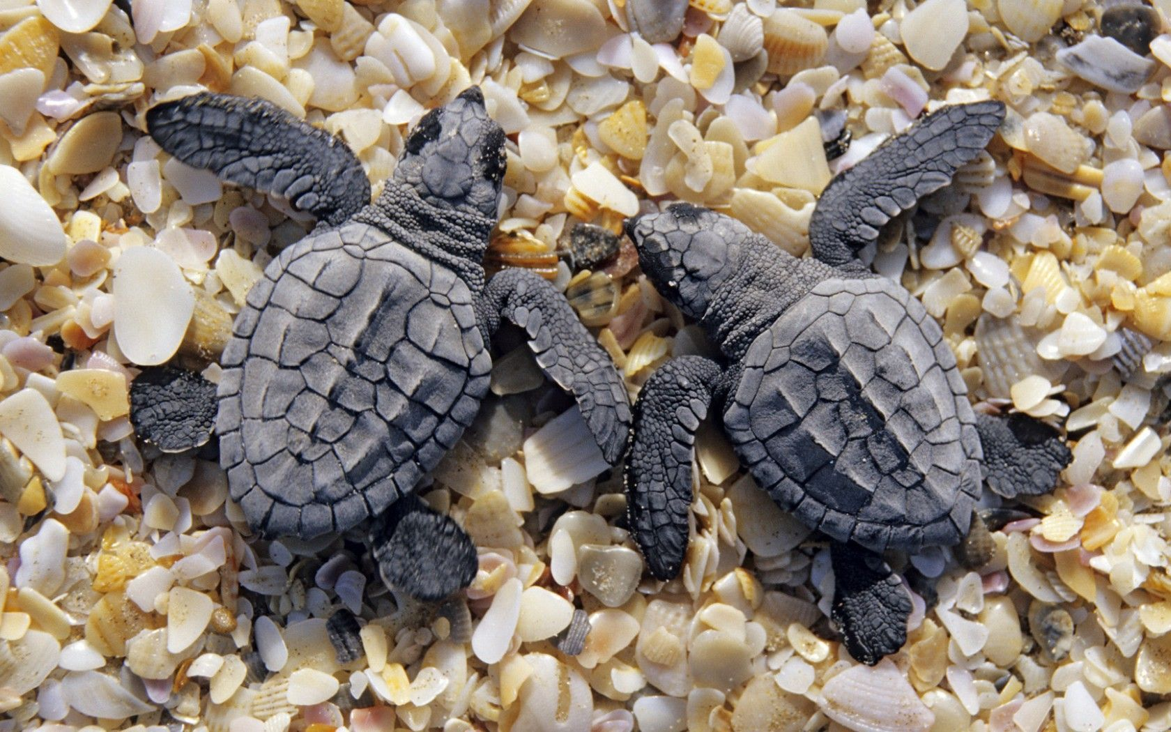 tortoise image hd