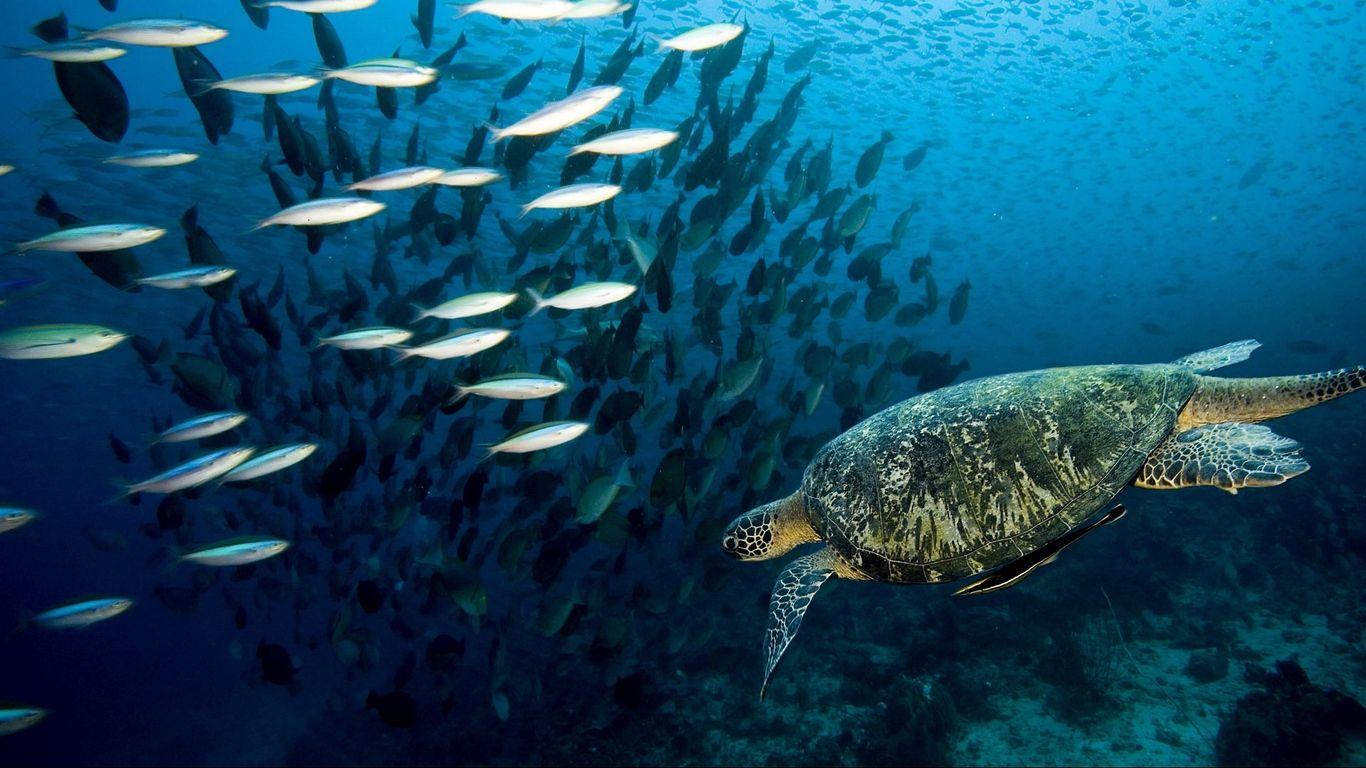 turtles images hd free