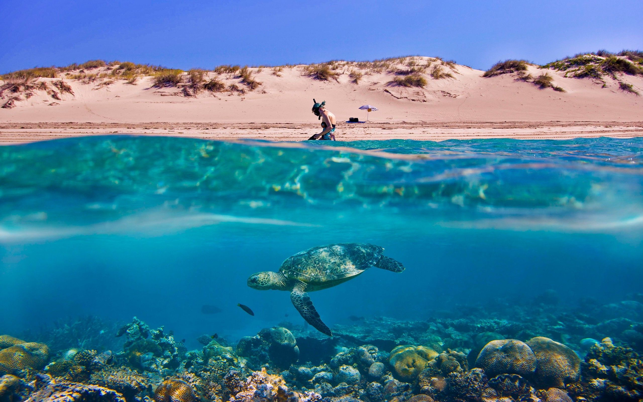 pics of sea turtle