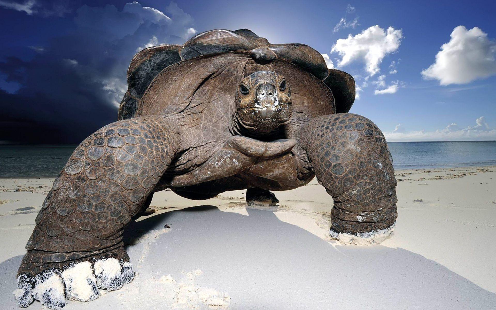 turtles pics hd