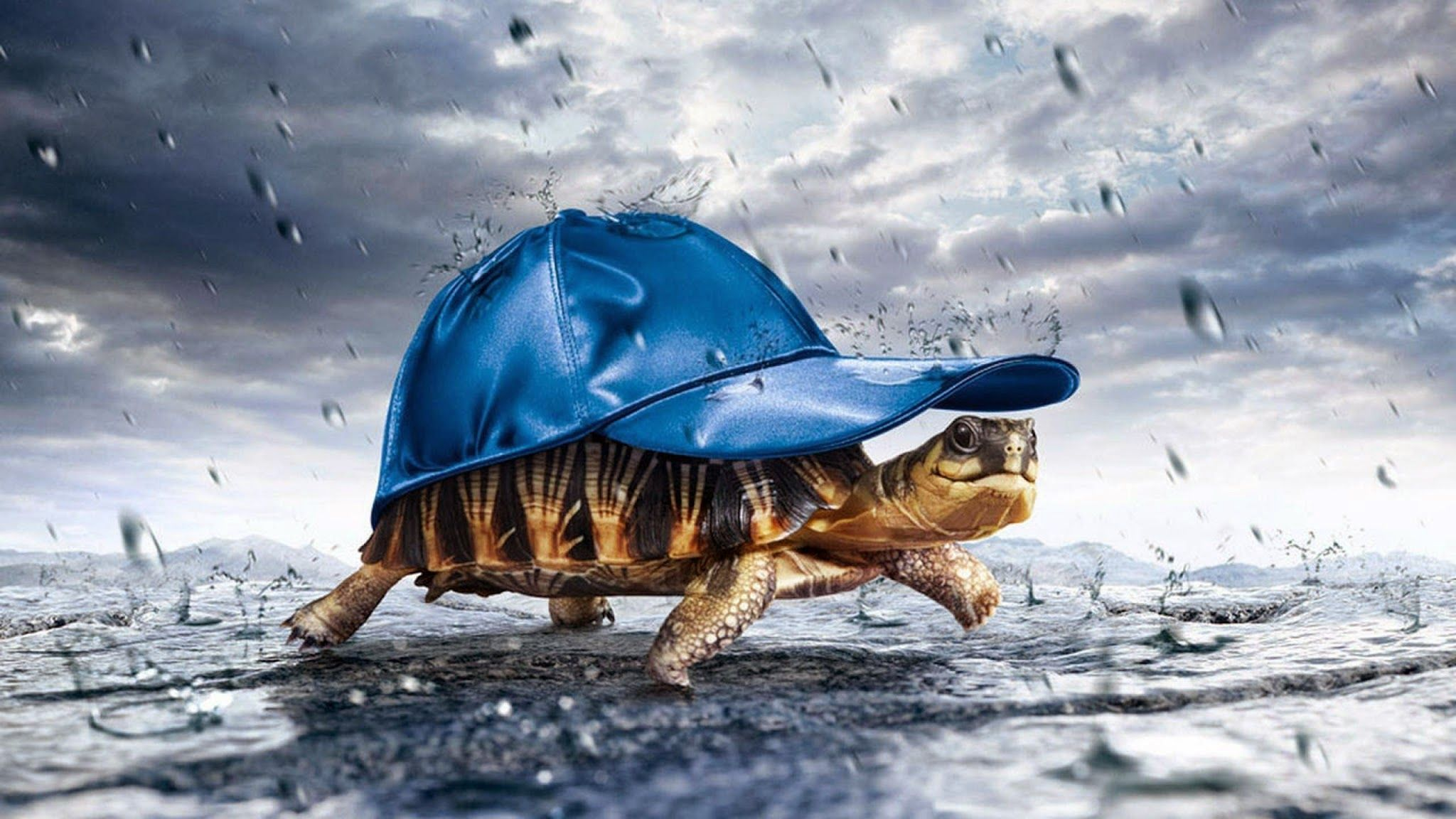 tortise photo hd free download