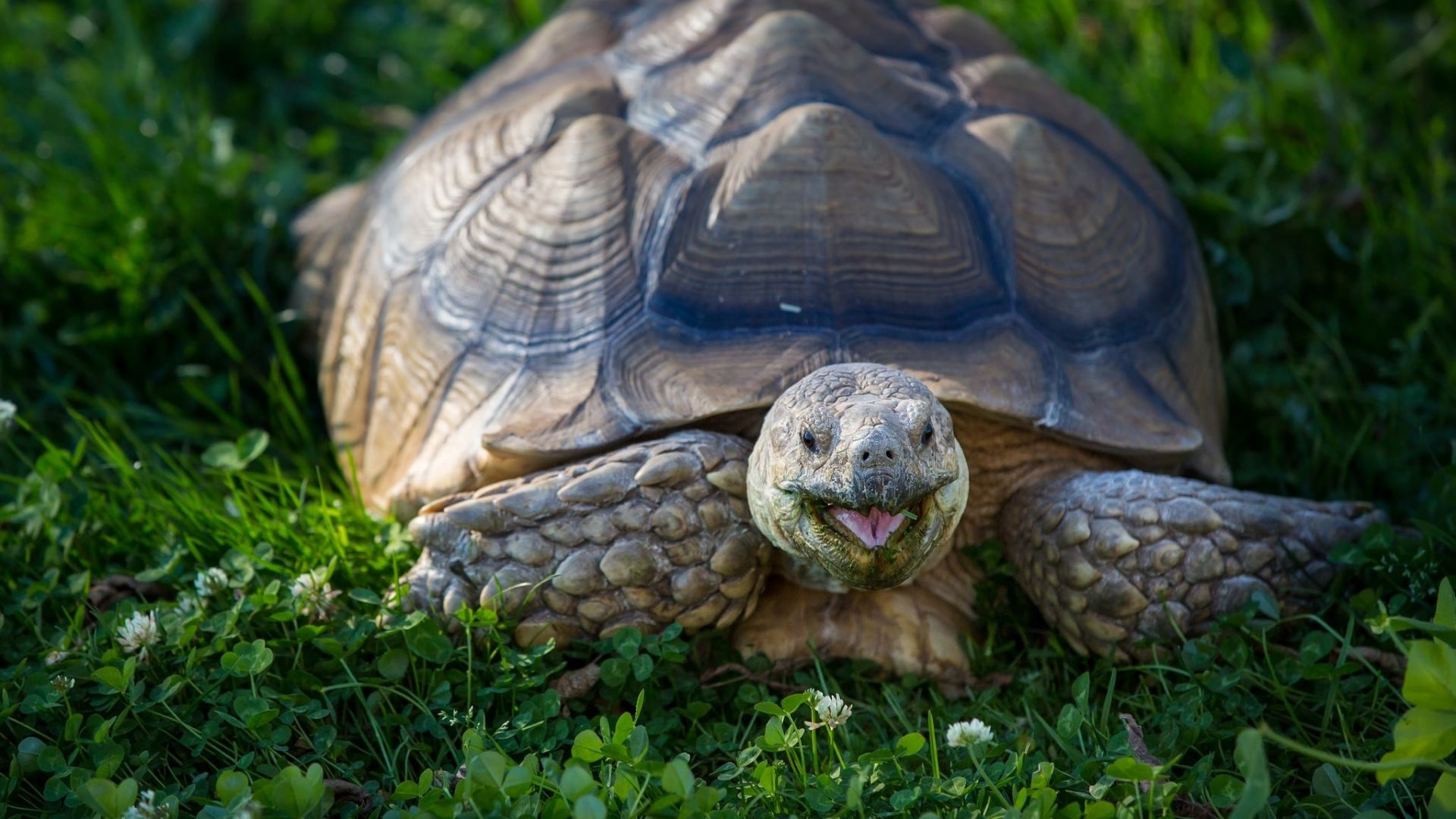 turtle images free download