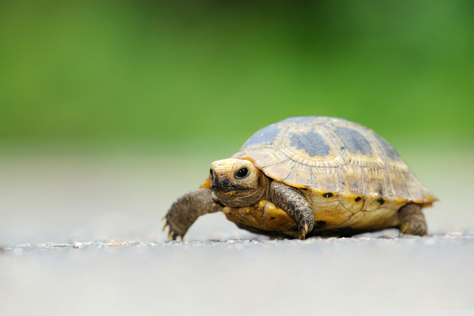 turtle wallpapers hd free