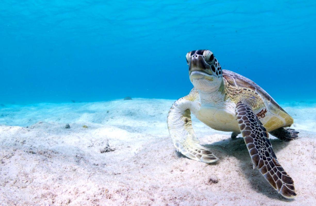 turtle desktop backgrounds