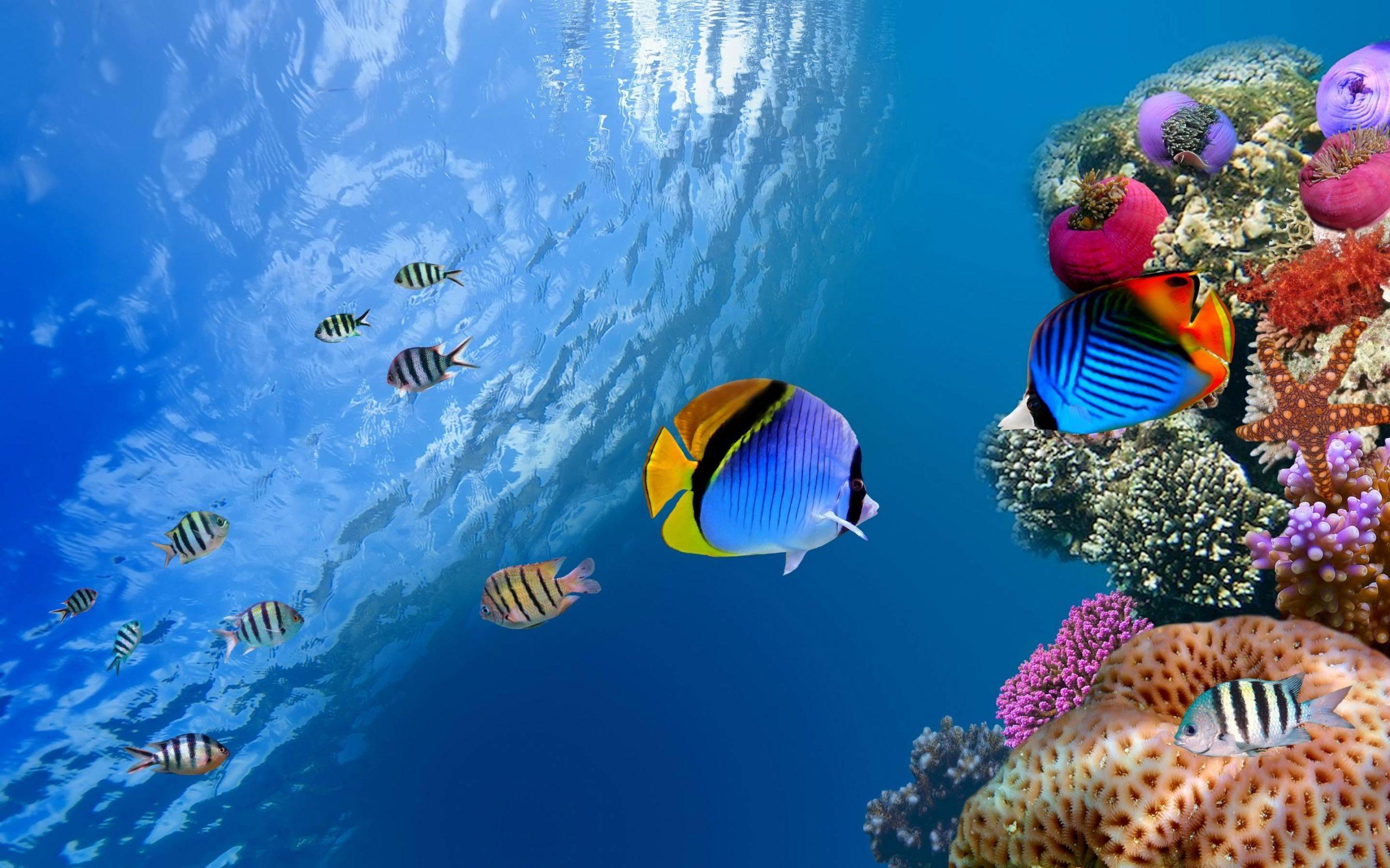 ocean underwater pictures