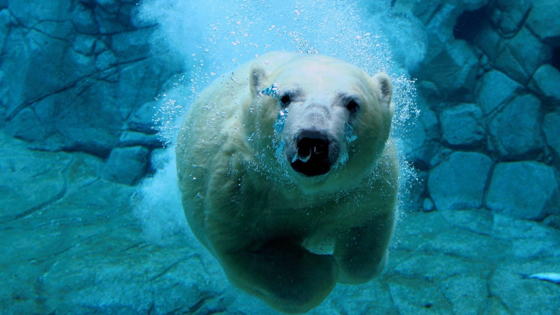 underwater images free download