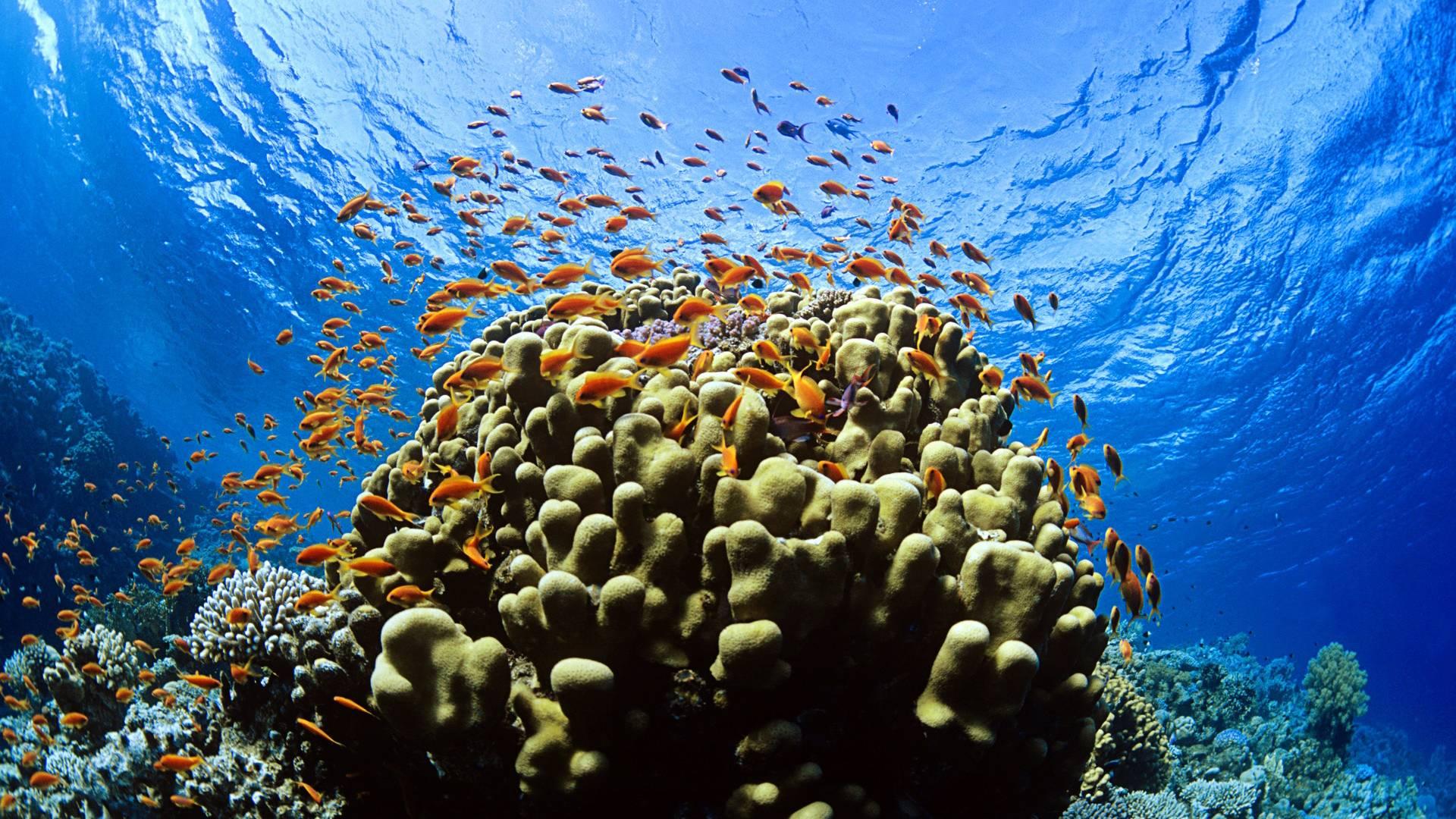 cool underwater pics