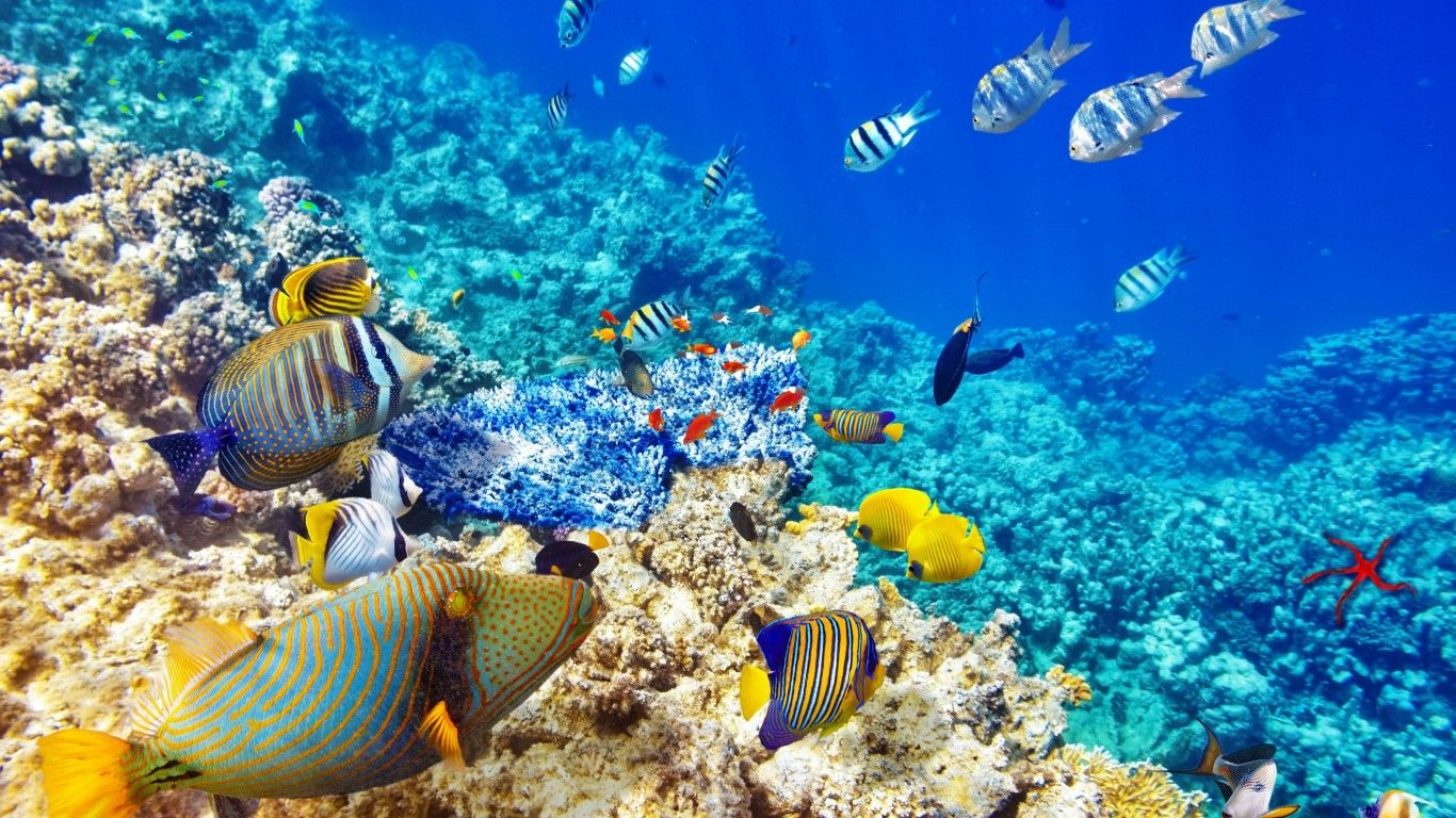 underwater iphone wallpapers
