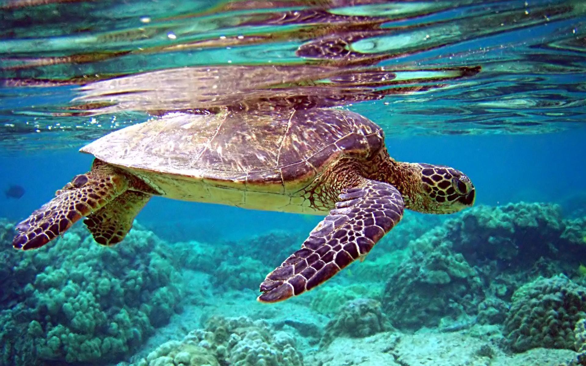 pictures of the ocean underwater