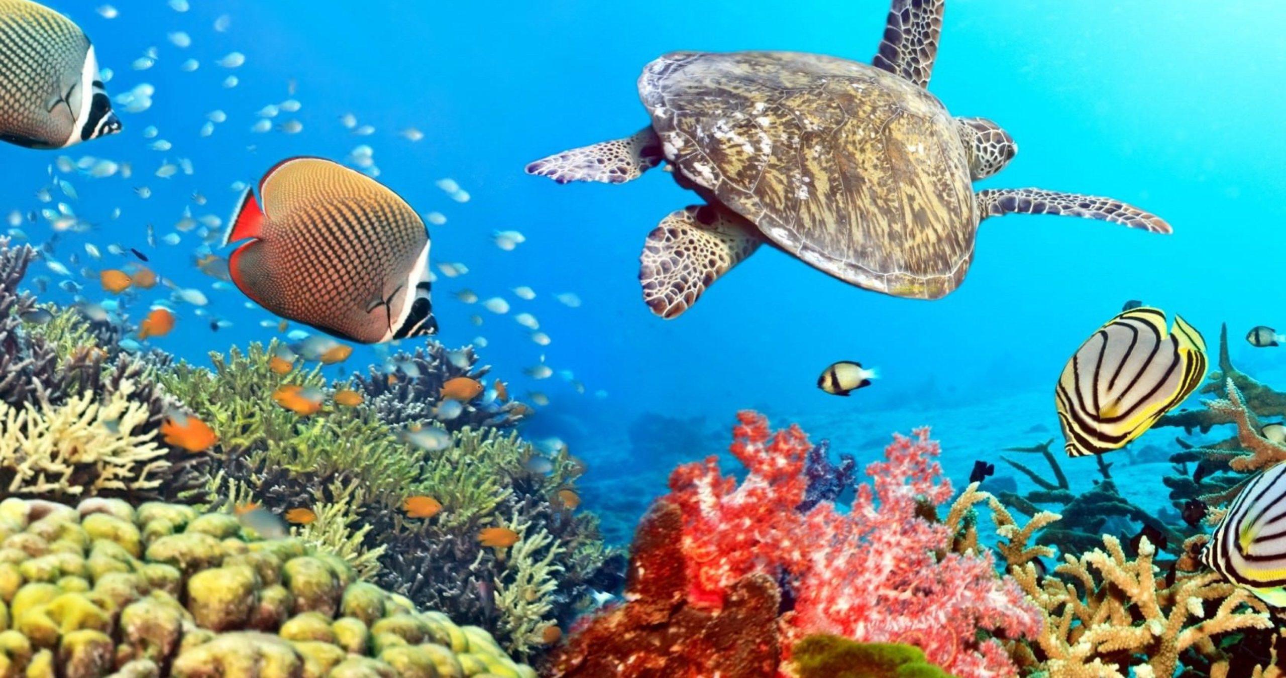 underwater ocean photography