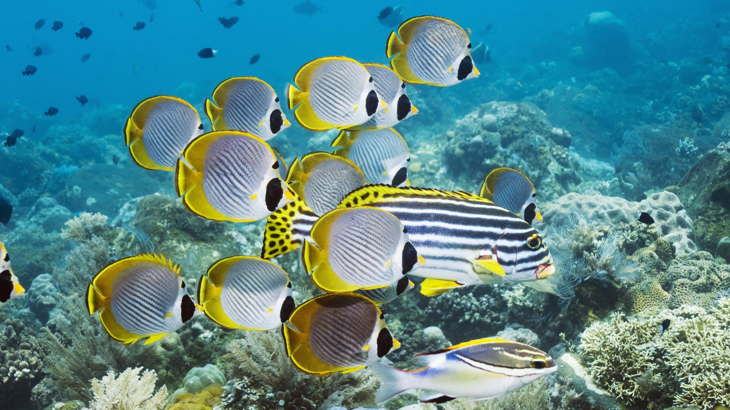 underwater sea pictures