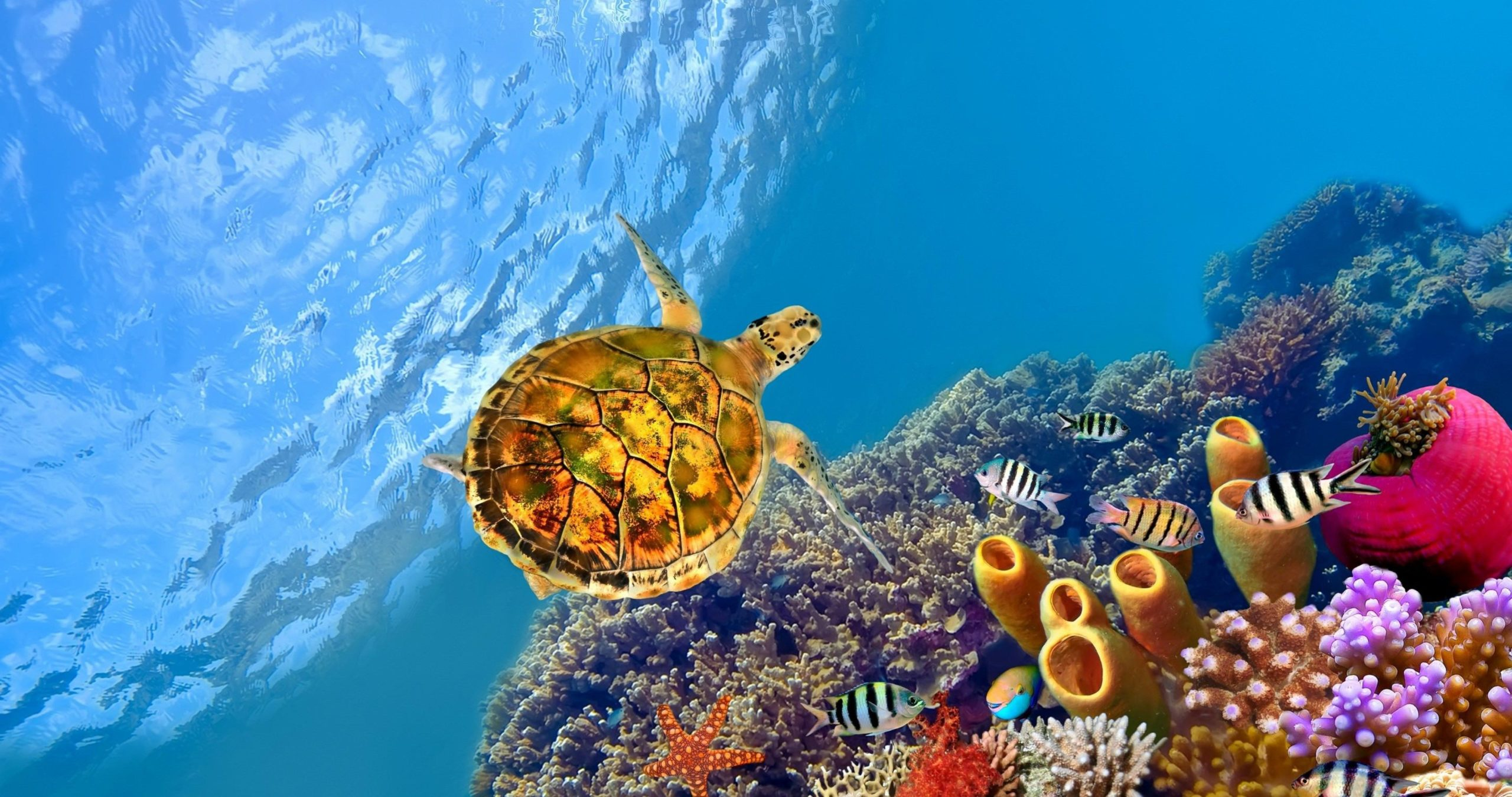 high resolution underwater images