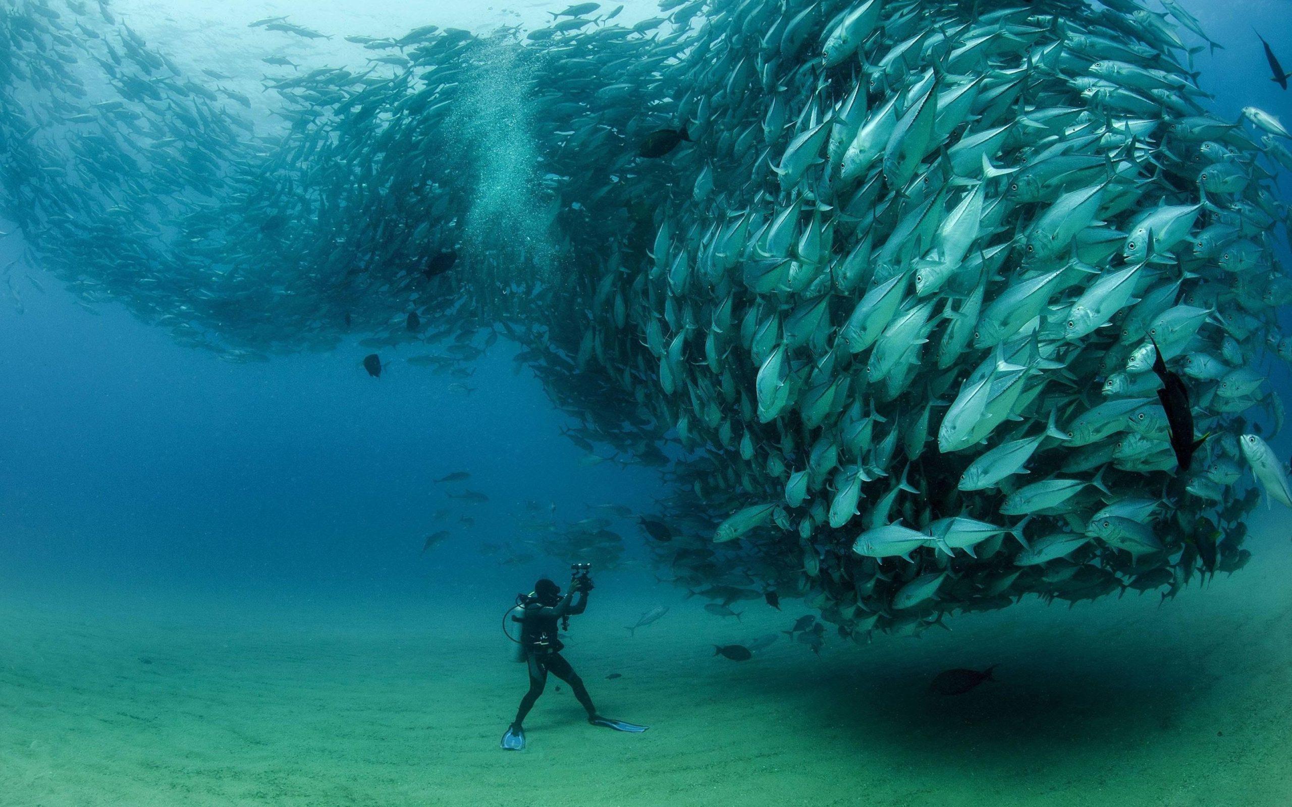underwater fish background