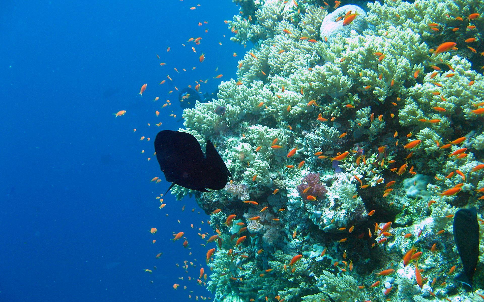 undersea photos