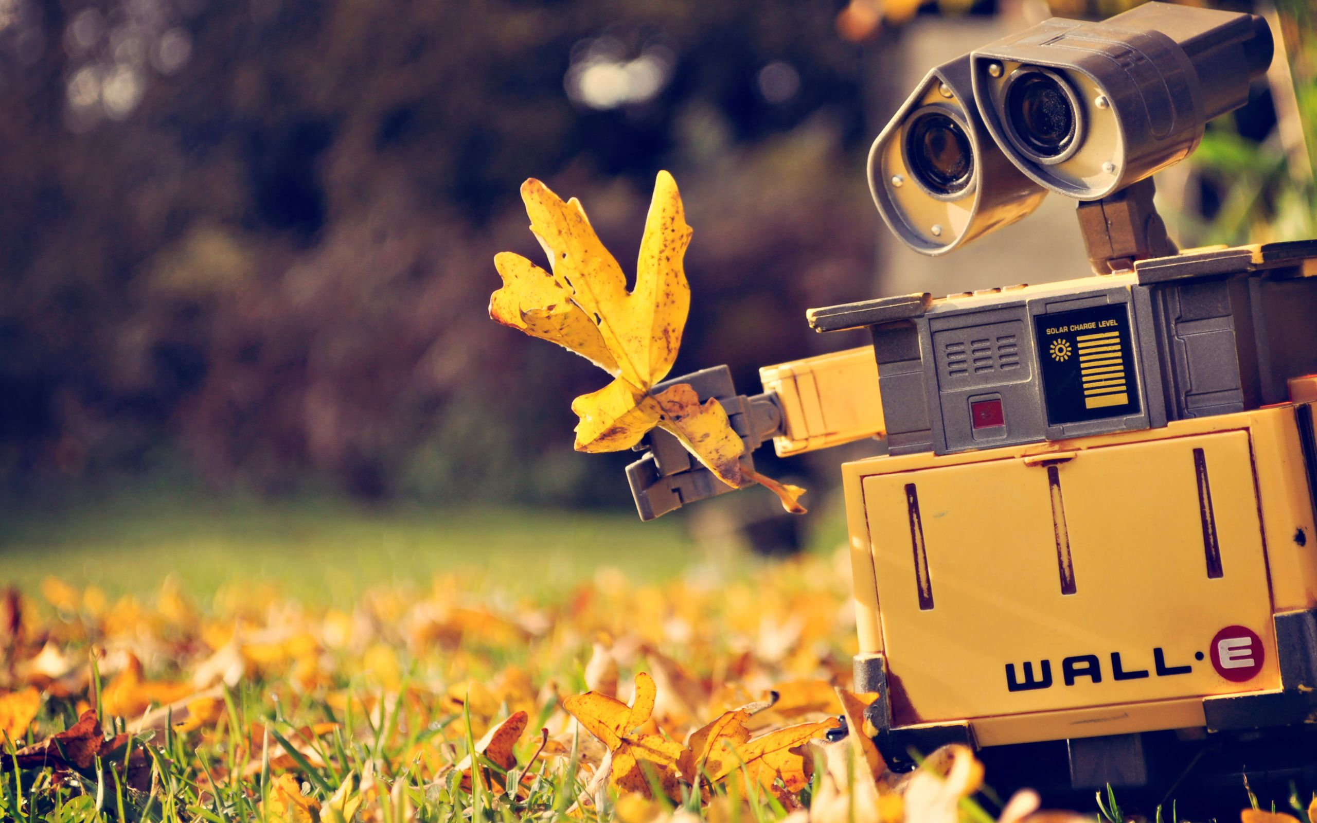 walle wall paper