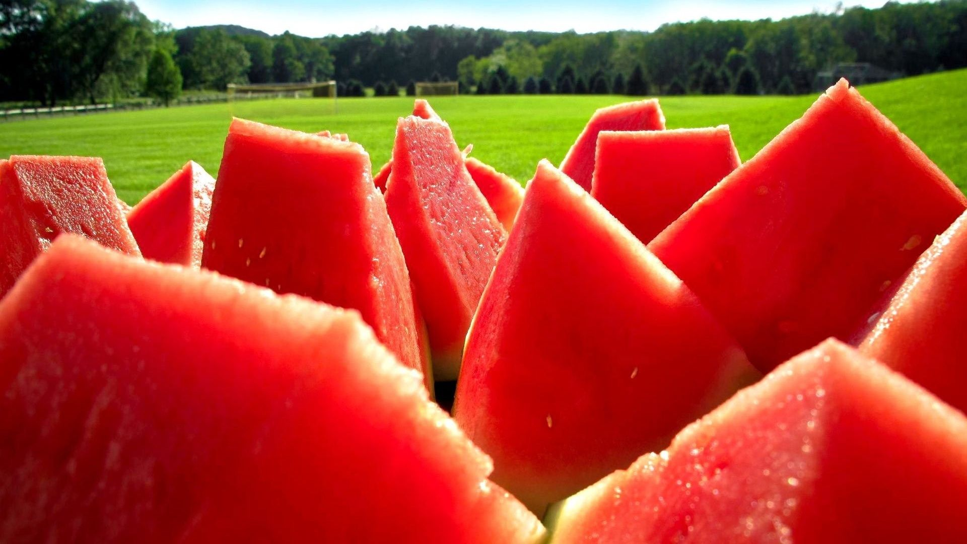 funny watermelon pictures