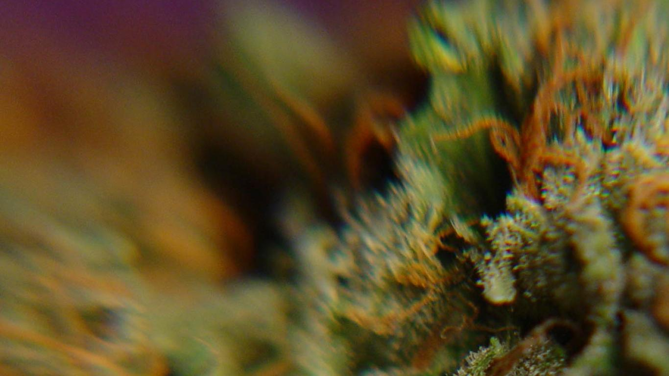 weed smoking wallpapers