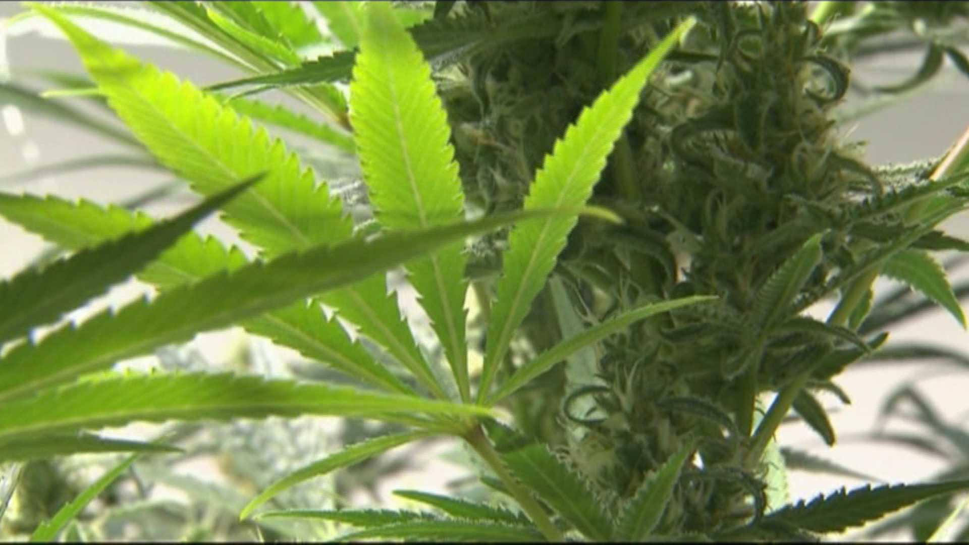 marijuana leaf wallpapers