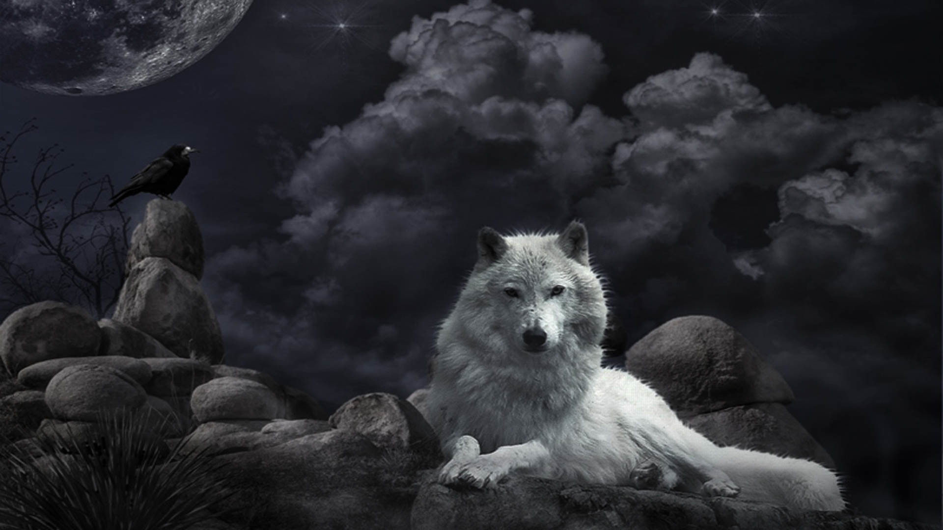 white wolf wallpaper background