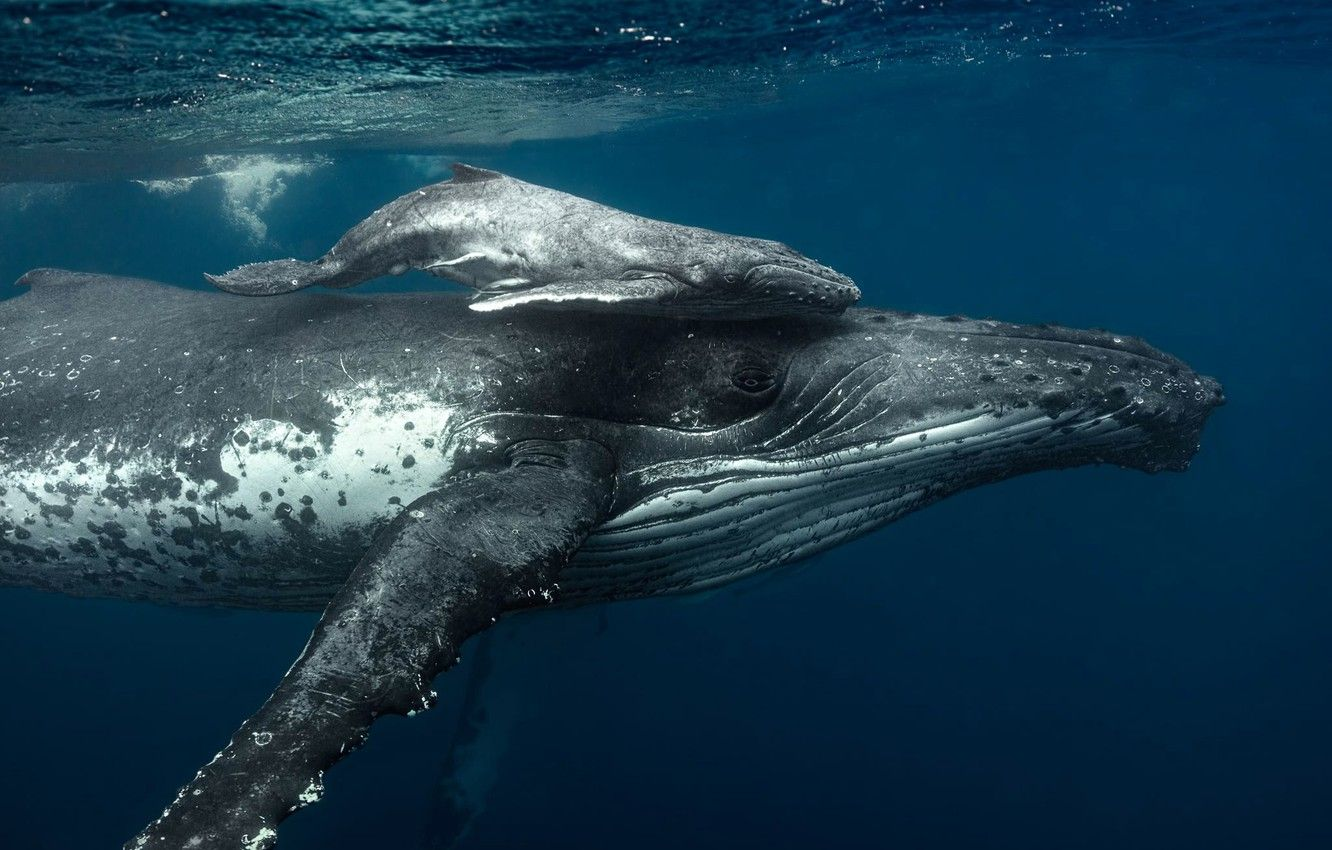 whale images
