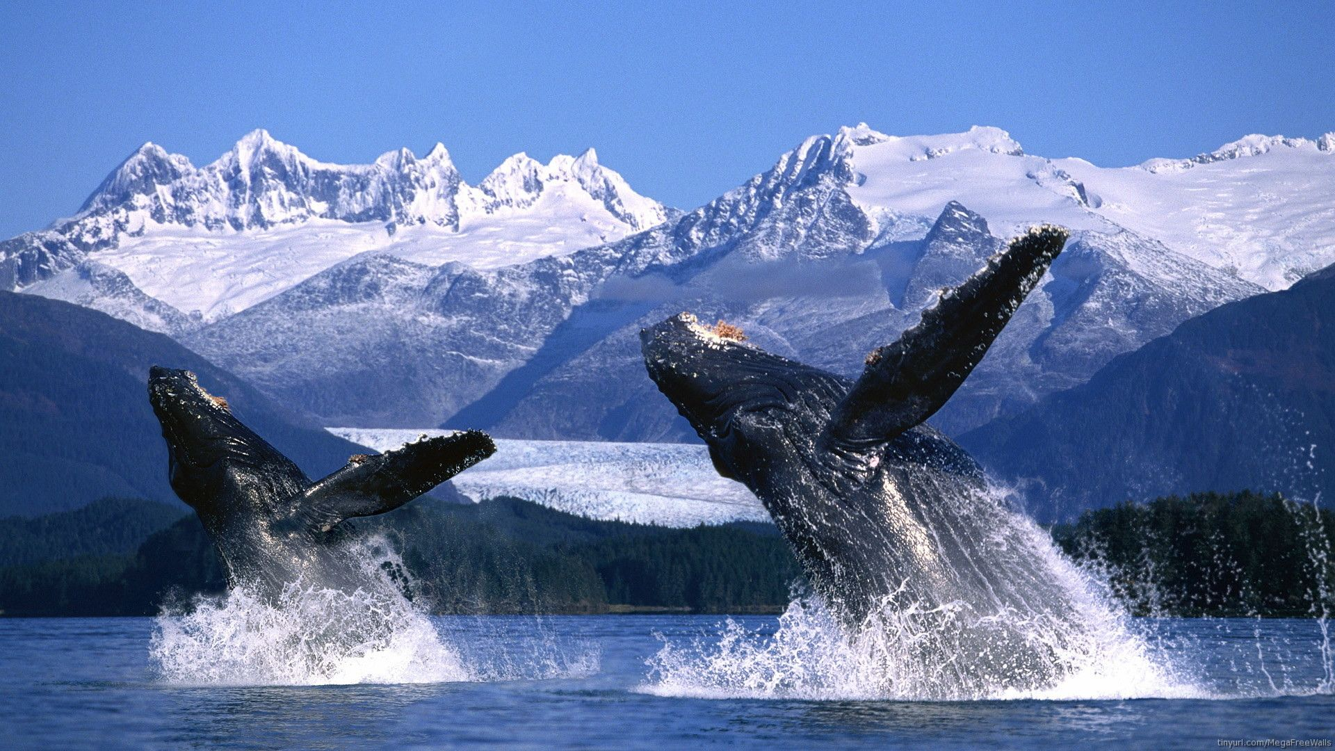 pics of whale