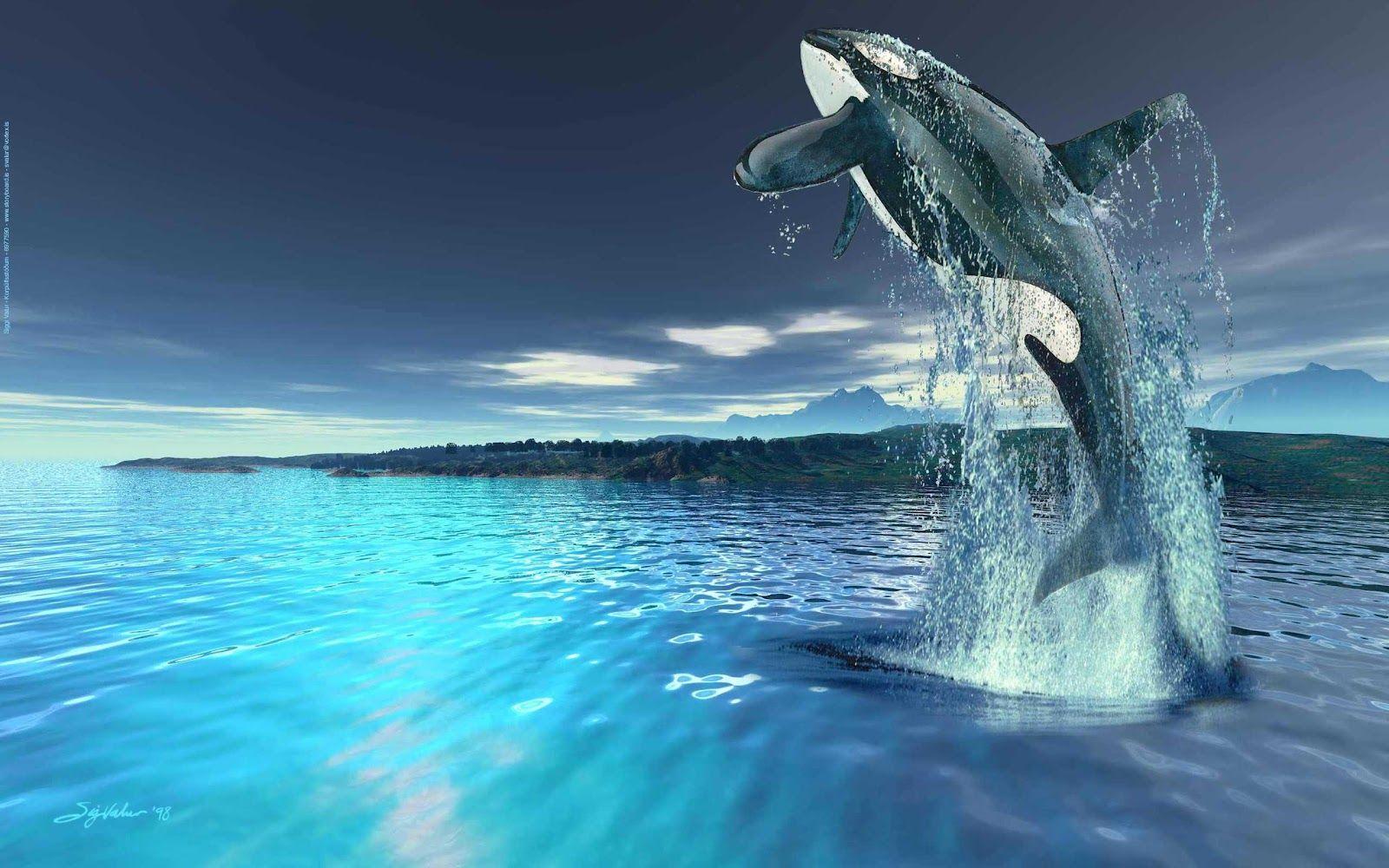 whales photographs hd