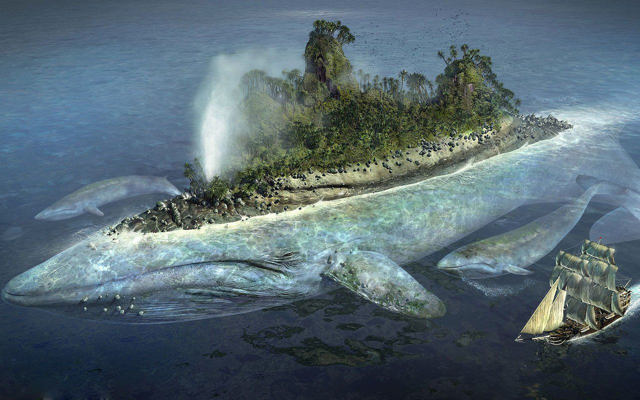 pics of whales hd