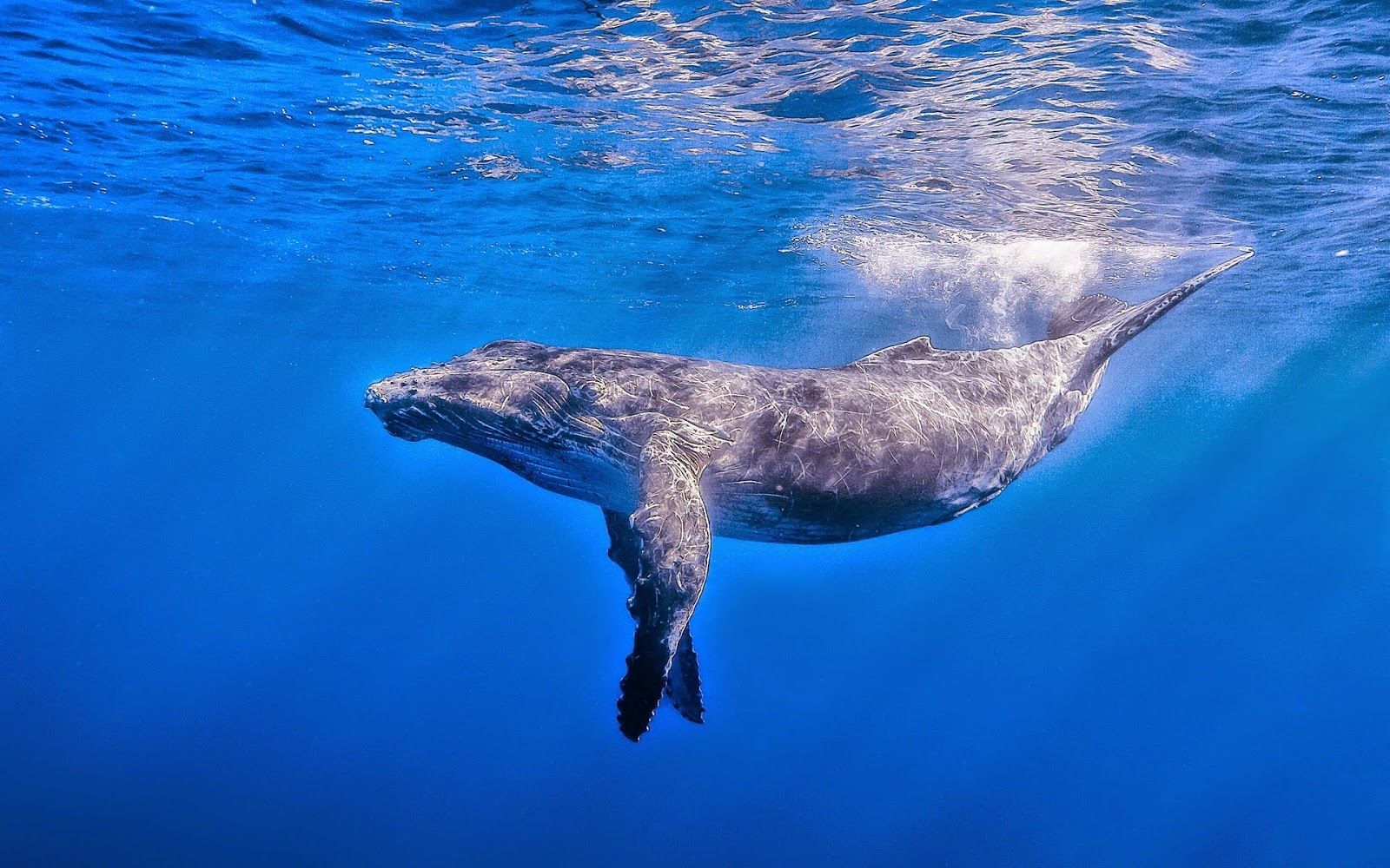 picture of a whale hd