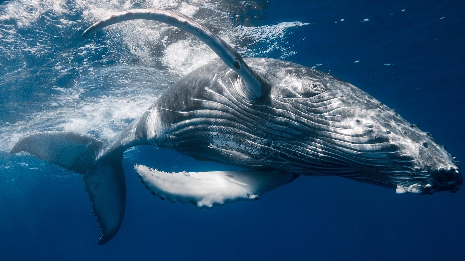 show me a picture of a whale