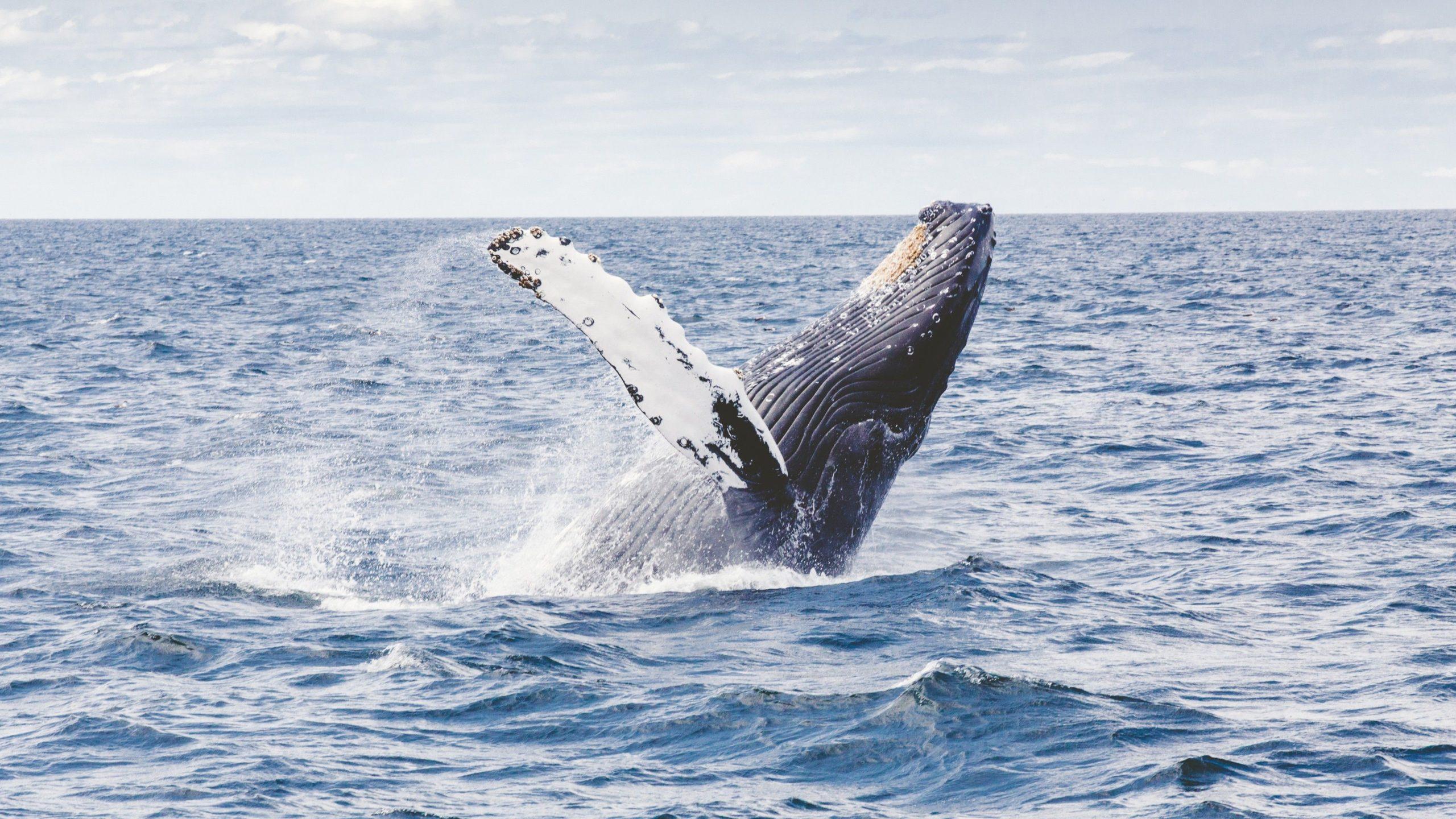 whale wallpaper 4k