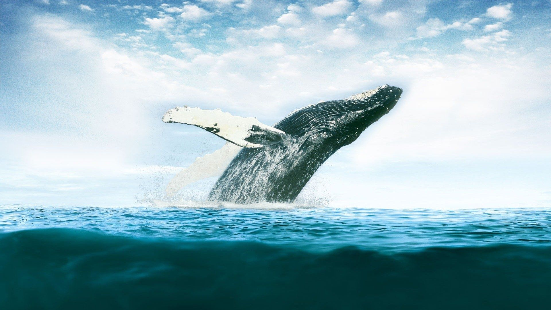 pictures of big whales