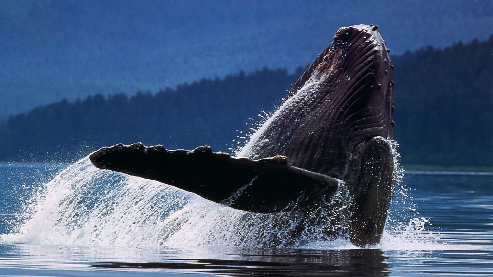 whales images free