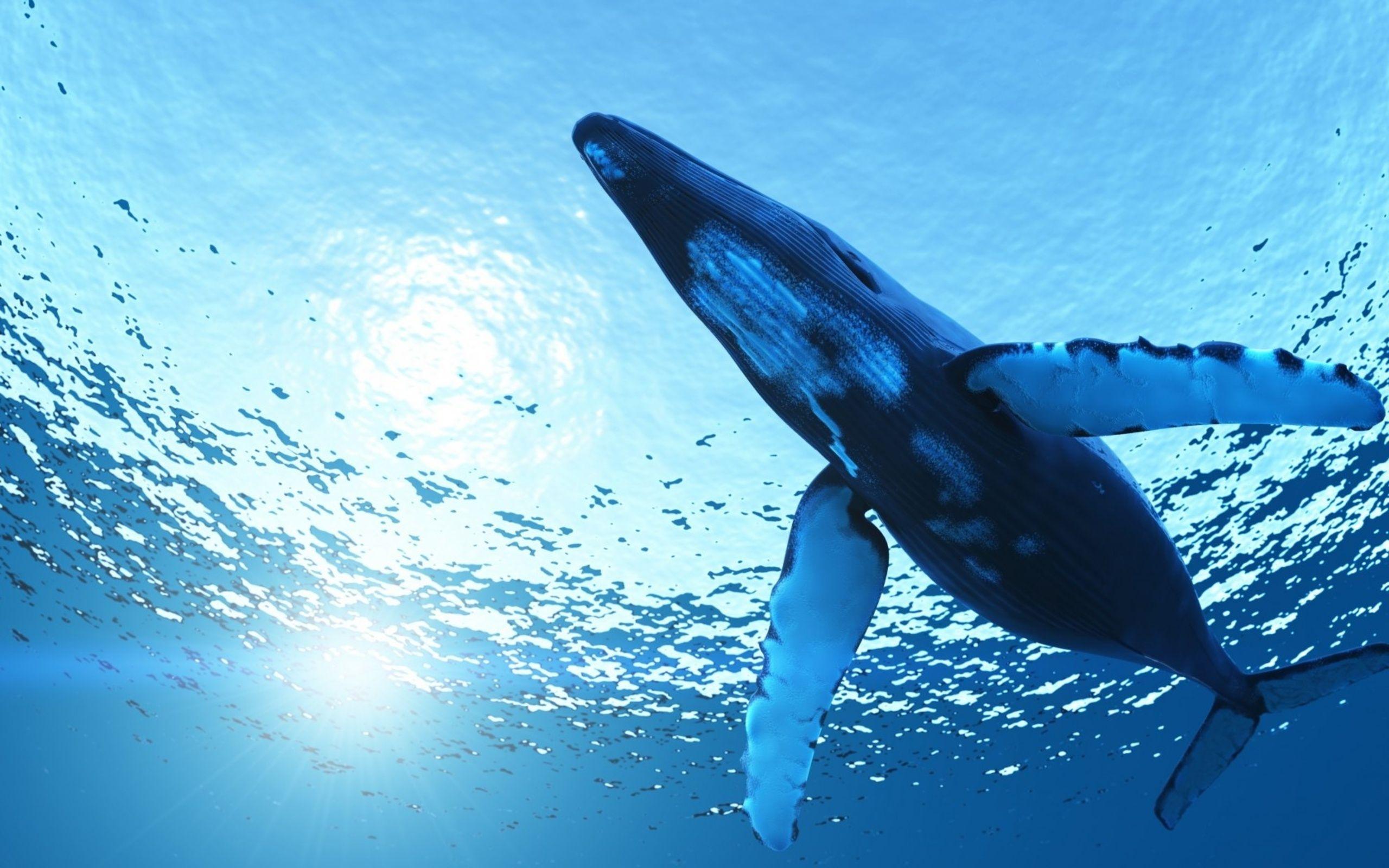 whale wallpaper hd