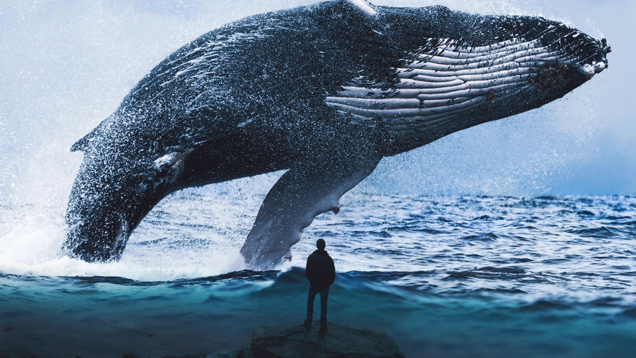 whale pic free