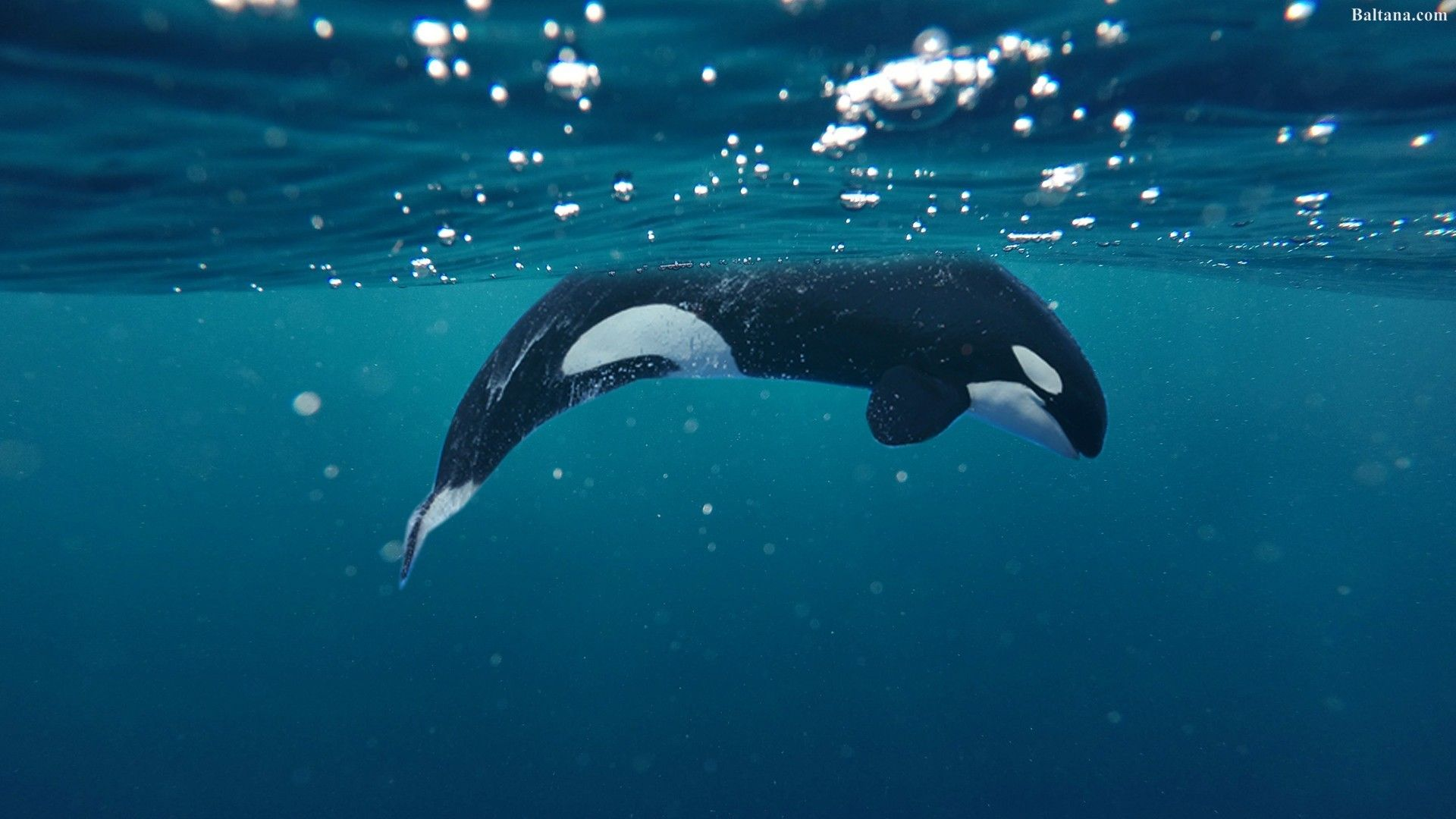photos of a whale