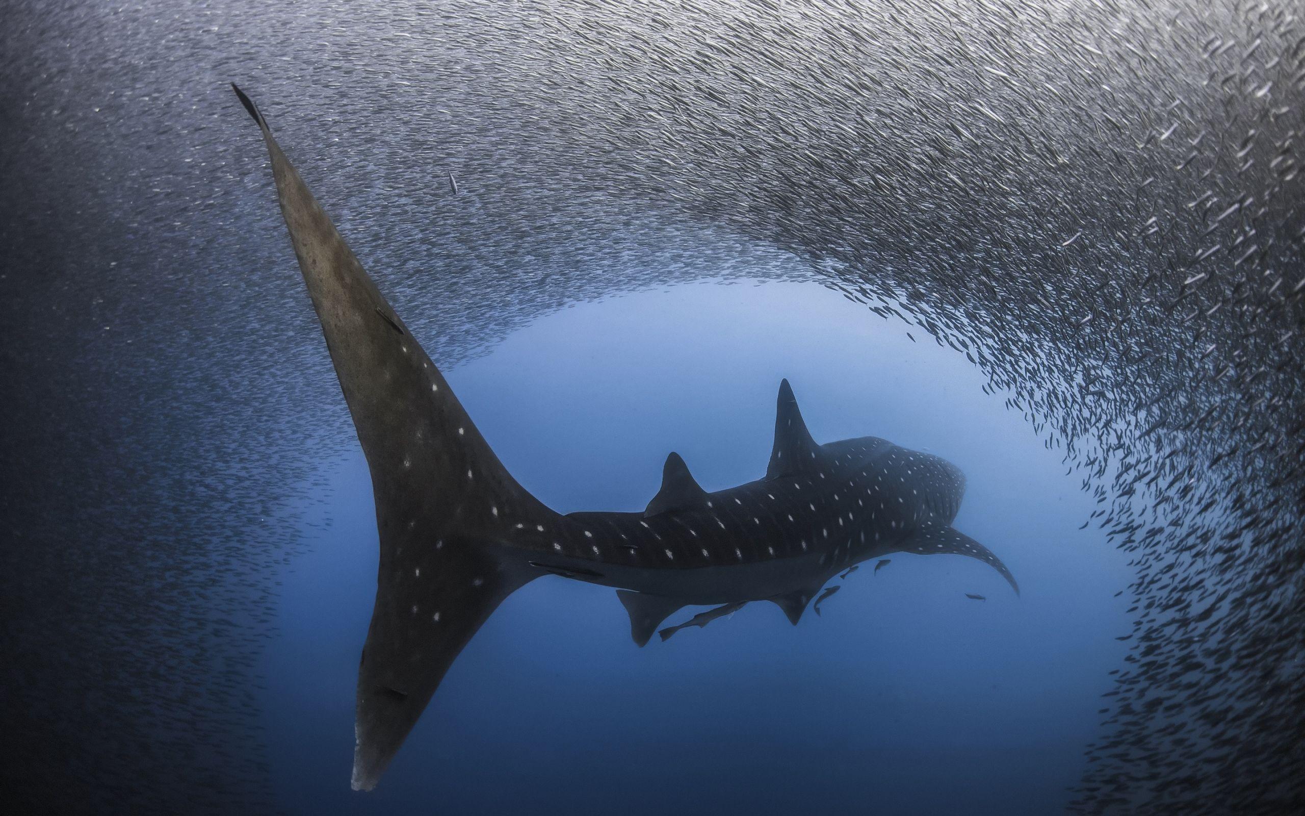 whaling photo