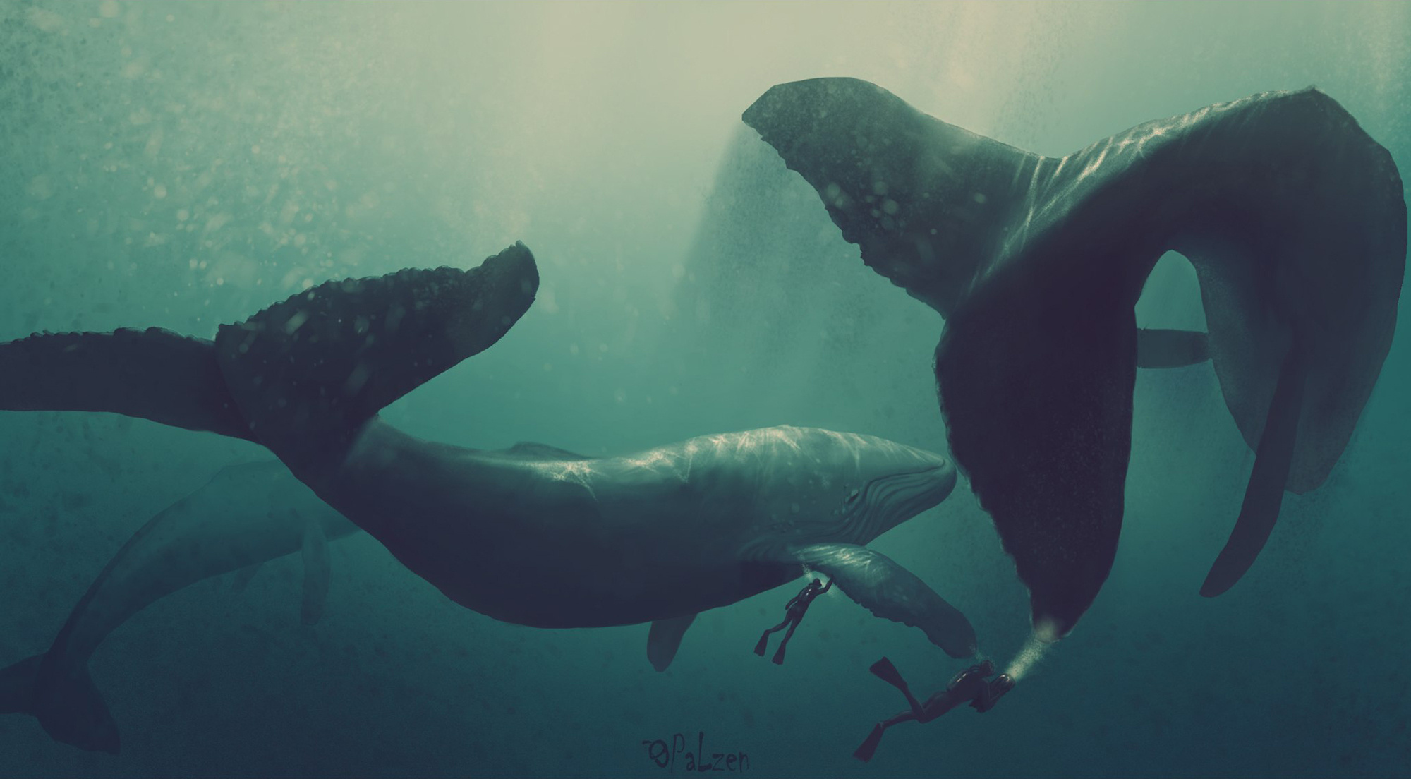 cool whale pictures
