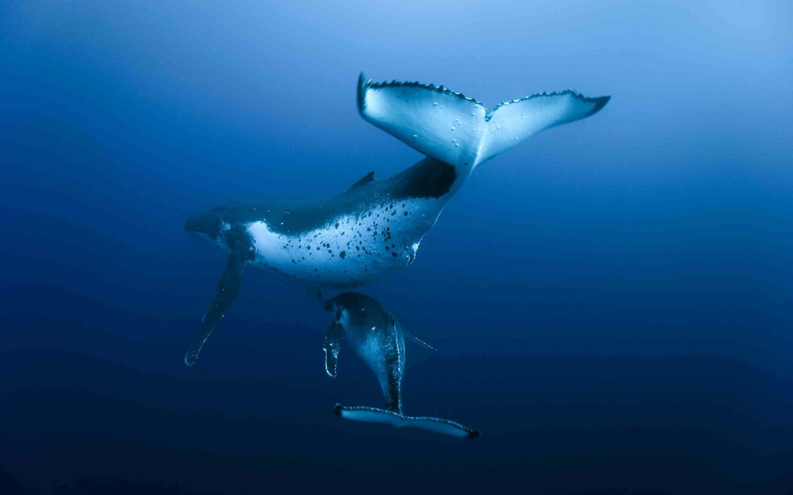 whale pictures to print