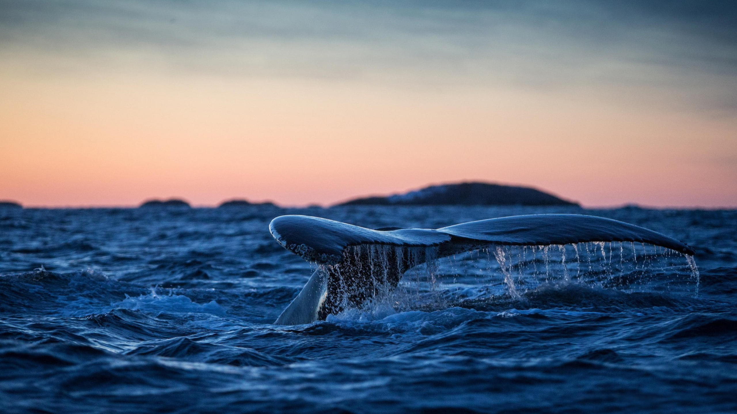 sea whales pictures
