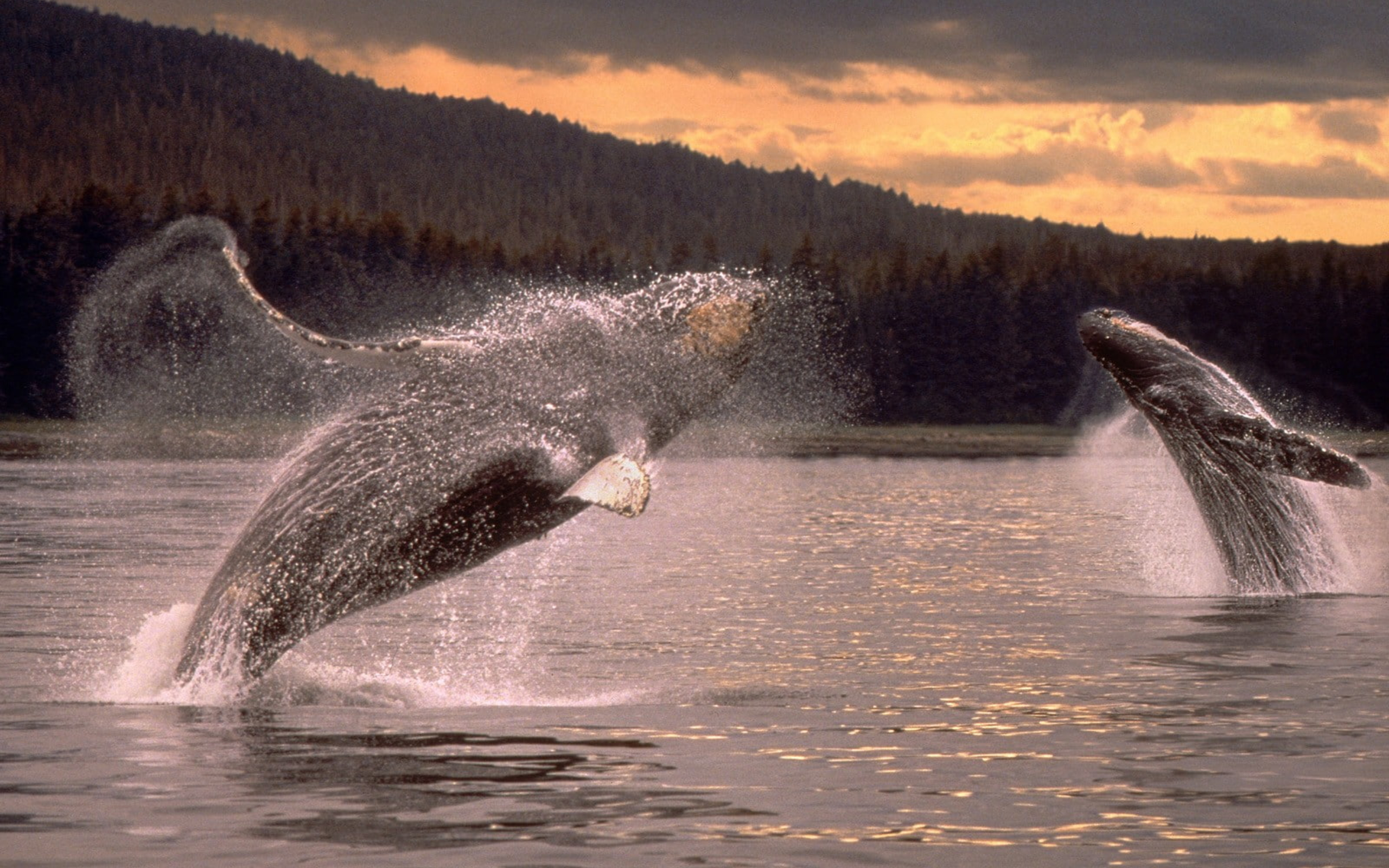whale profile wallpaper