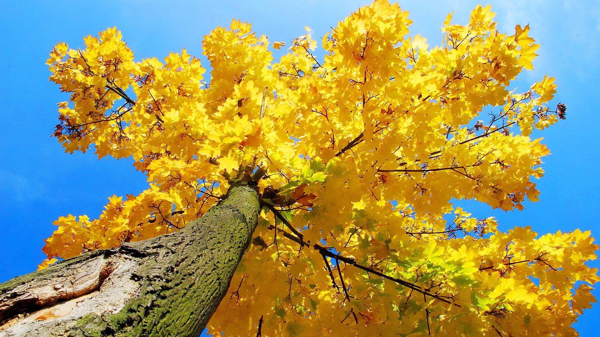 yellow aesthetic background