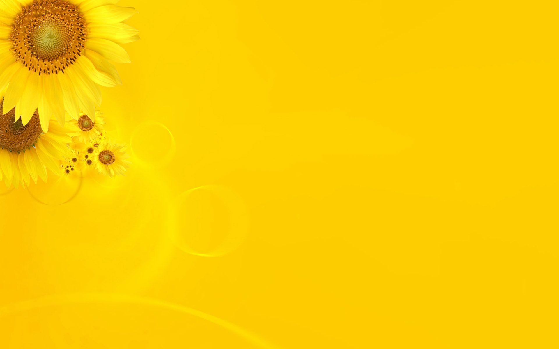 yellow background aesthetic