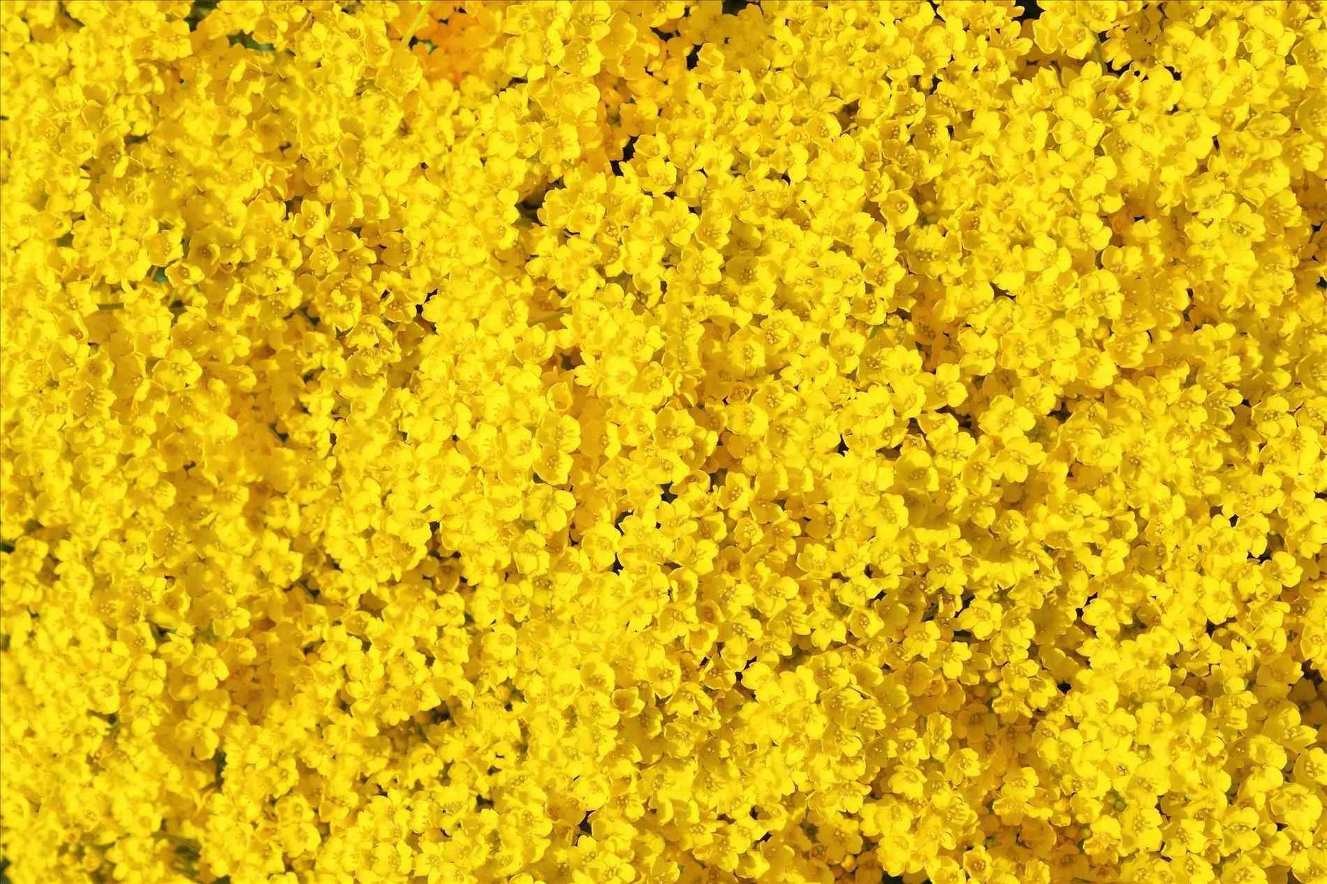 yellow aesthetic computer wallpaper